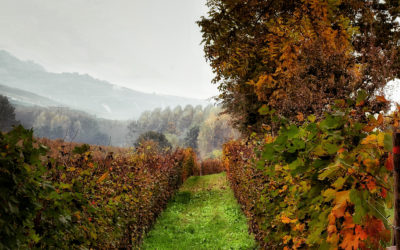 Barolo – War and Peace